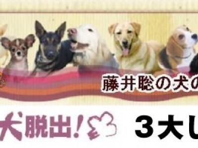 藤井聡 犬のしつけ方