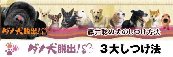 藤井聡 犬のしつけ方は、無駄吠えや噛みつくなど、犬の問題行動を解決する、犬しつけ法を紹介しています。