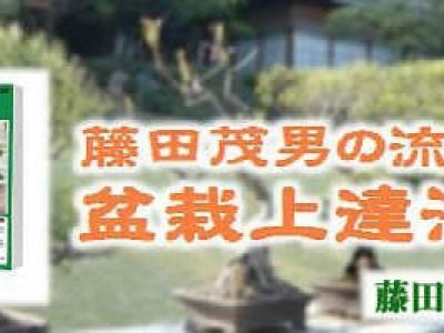 藤田流 盆栽上達法