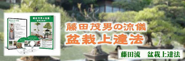 藤田流盆栽上達法は、土作り、水やり、肥料の方法から改作(アレンジ)までマスターできる、藤田茂男の盆栽習得法です。